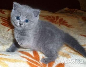 Празицид для котят суспензия инструкция