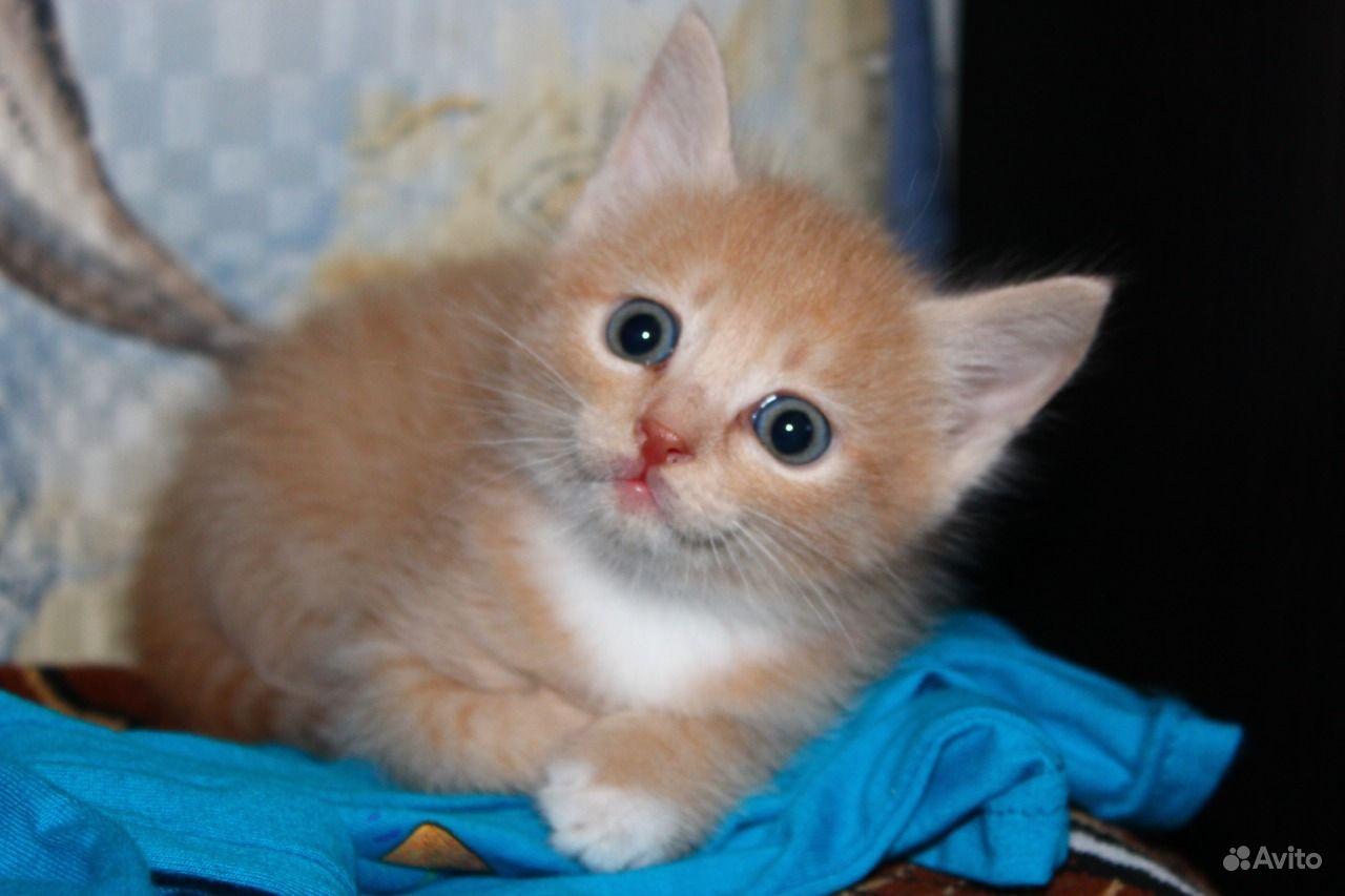 Отдам котенка другая порода смешанная