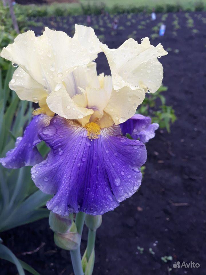 Цветы из собственного сада купить на Зозу.ру - фотография № 5