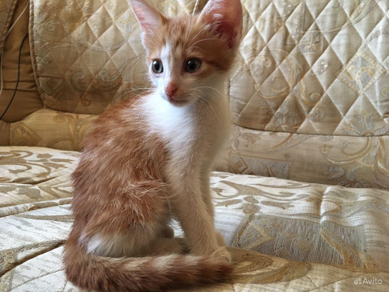 Спасите котёнка в Краснодаре - фотография № 1