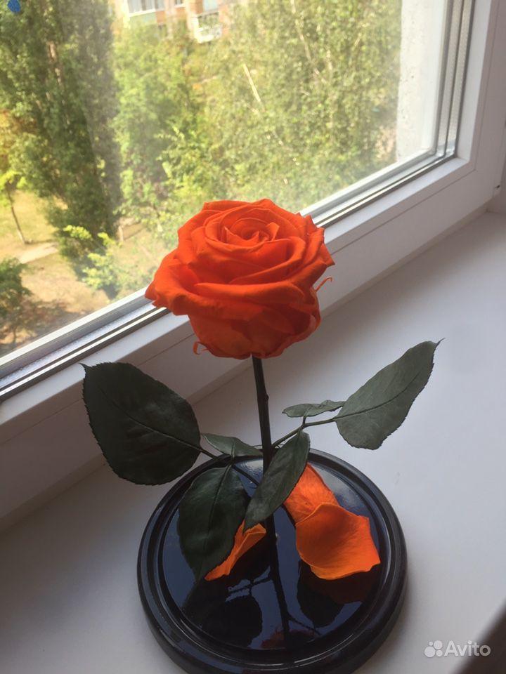 Роза в колбе купить на Зозу.ру - фотография № 1