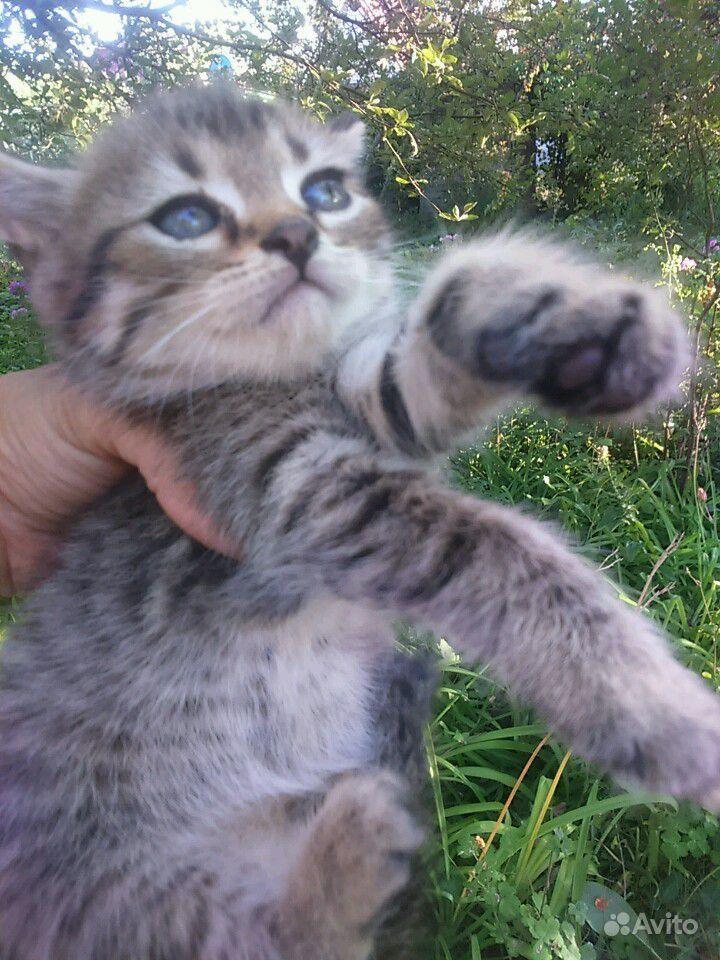 Котята, 1 месяц. Приучены к лотку в Саратове - фотография № 3