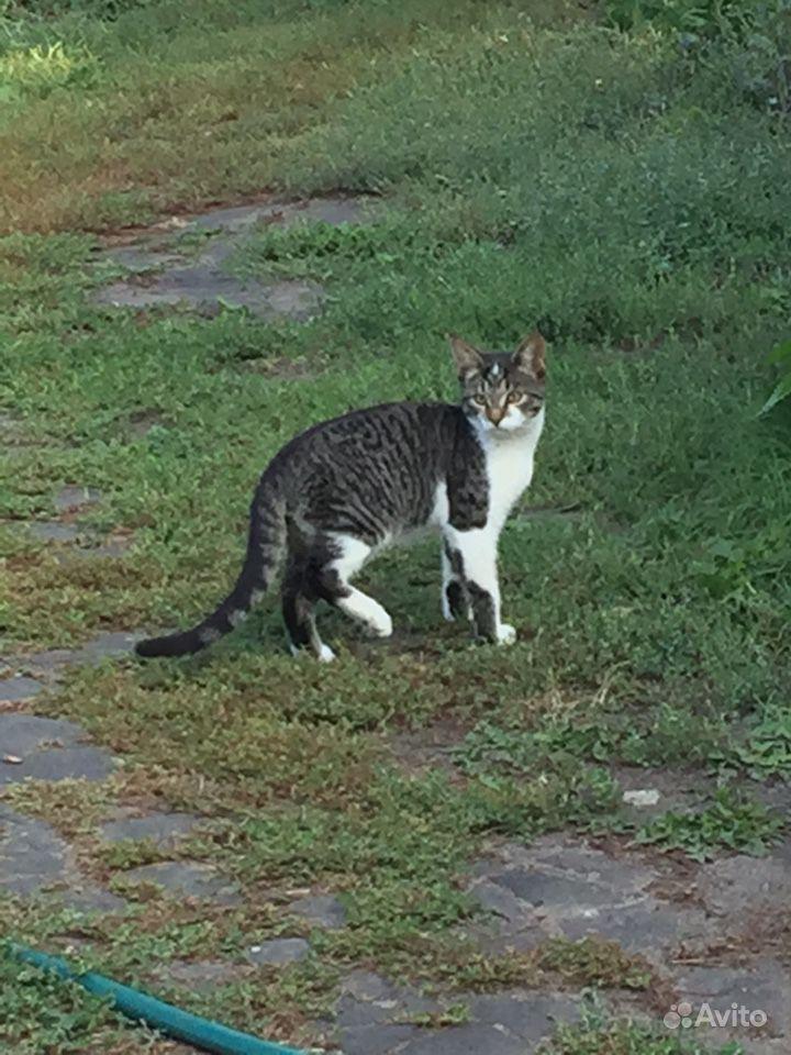Котята от породы