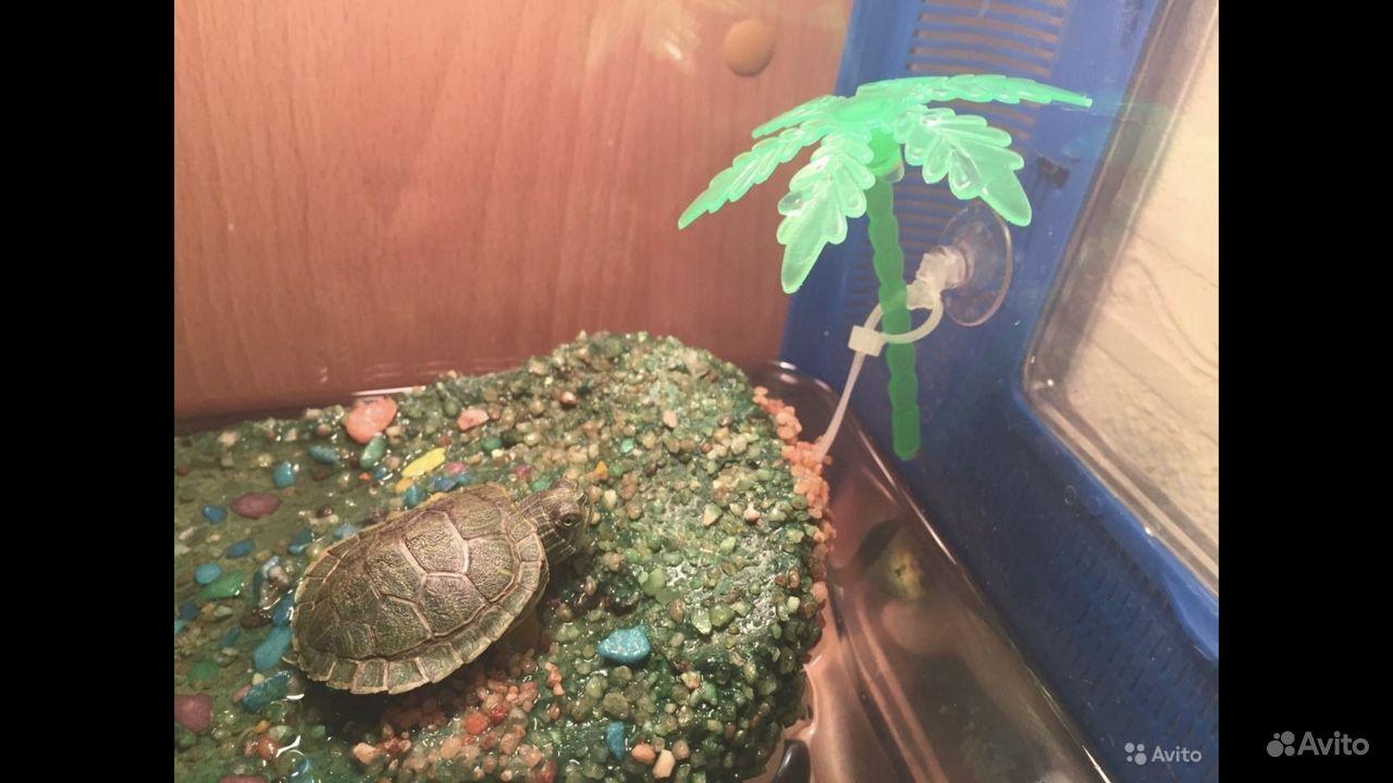 Островок в аквариум для черепахи купить на Зозу.ру - фотография № 5