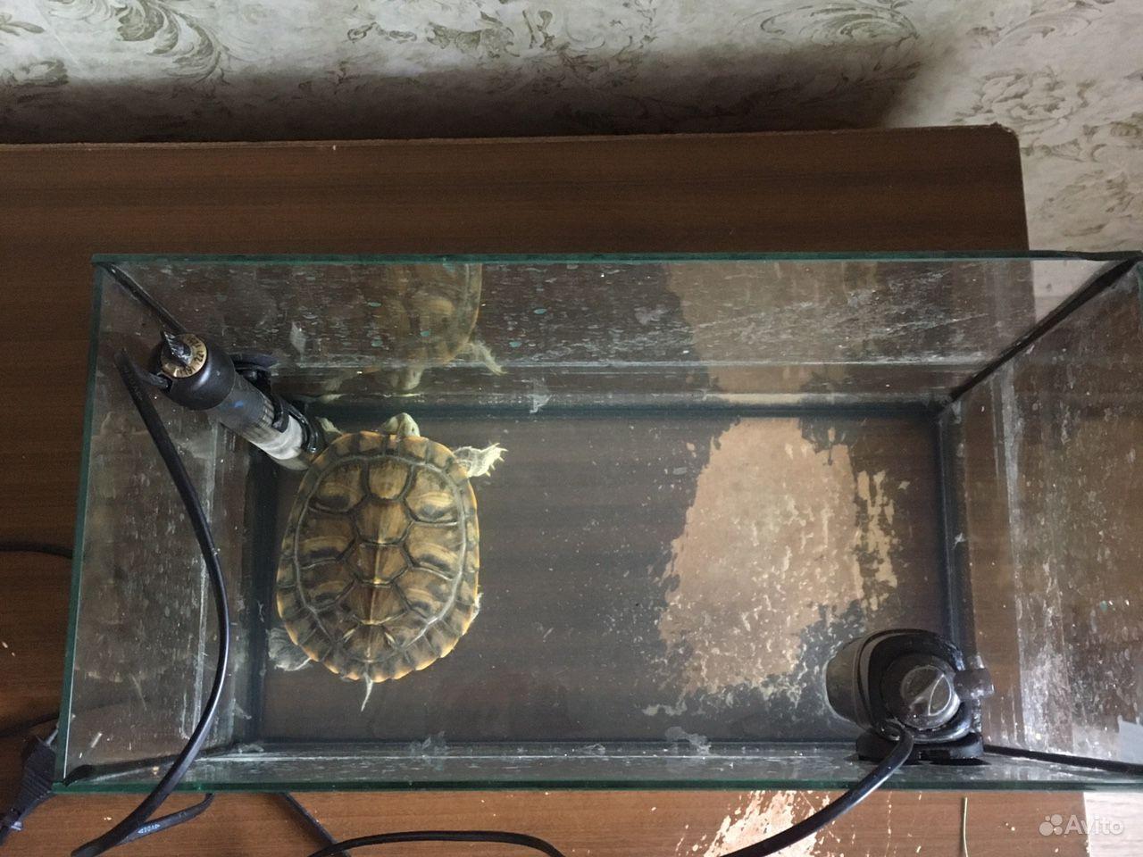 Аквариум и черепаха купить на Зозу.ру - фотография № 2