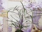 Цветы(10 видов)