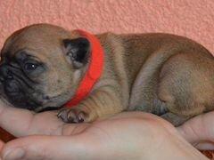 Дать объявление бесплатно в пензе о собаках россошанские ведомости объявления работа