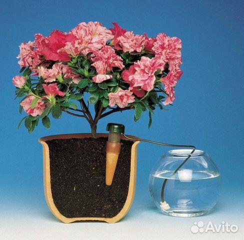 Ростов купить комнатные цветы