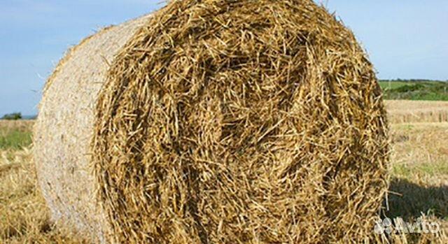 конкурса принадлежит продажа овса в ярославской области организации воинского