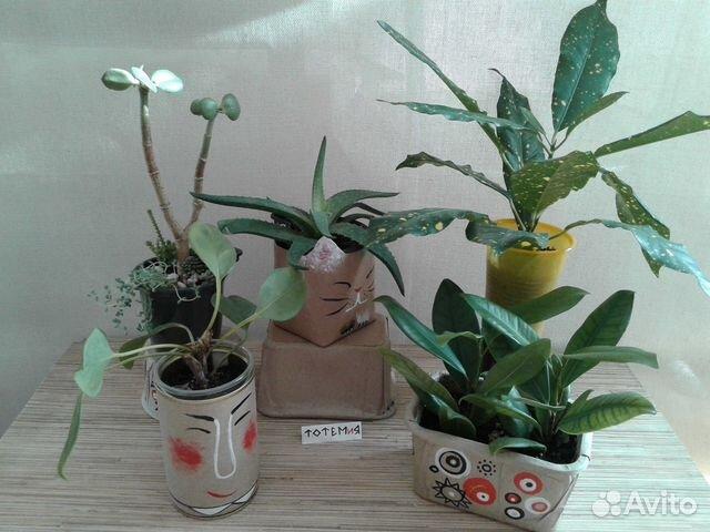 Горшечные цветы новосибирск купить