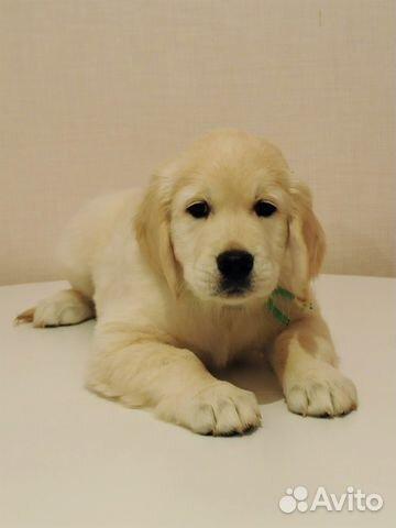 Подать объявление о щенках в тюмени газета шанс в абакане объявления услуги