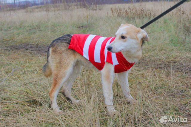 Милашка Собака подросток Эви в дар купить на Зозу.ру - фотография № 4