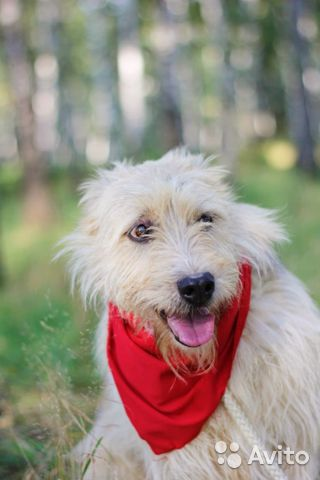 Собака неженка Иви в добрые руки купить на Зозу.ру - фотография № 2