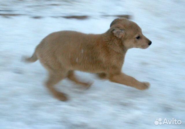 Малыши ищут семью (8 щенков метисов в дар) купить на Зозу.ру - фотография № 8