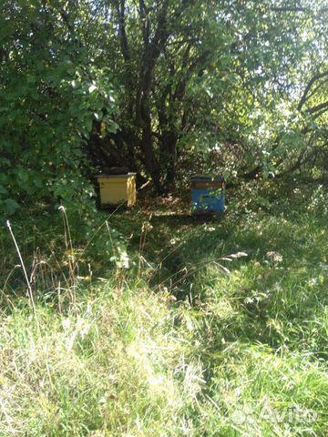 Пчелы с домиками 89082811313 купить 2