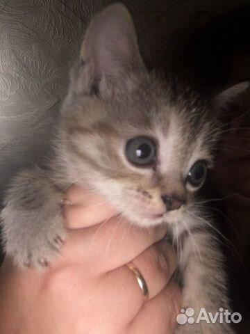 Котята в добрые руки даром  89833975530 купить 3