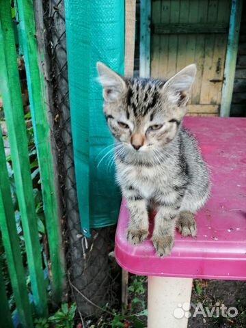 Кошка  89137398914 купить 2