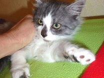 Тимоша, Тимофей 2 месяца — Кошки в Геленджике