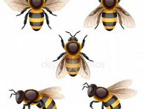 Пчелосемьи-дадан