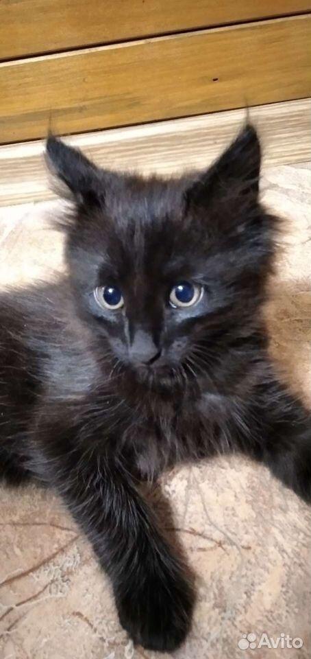 Кошка  89029455536 купить 4