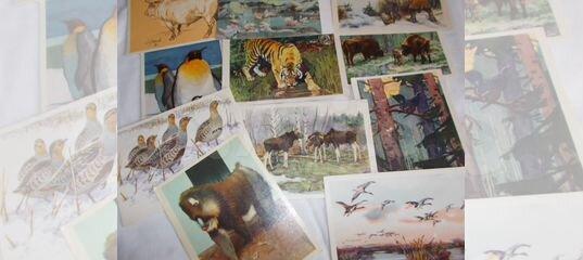 Набор открыток ленинградский зоопарк, днем