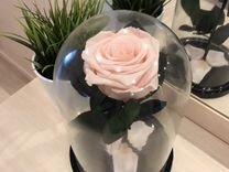 Розовая Роза в Колбе PremiumXL
