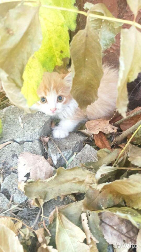 Кошка  89383050600 купить 2
