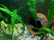 Фронтозы мальки от 5 см, другие цихлиды и сомы