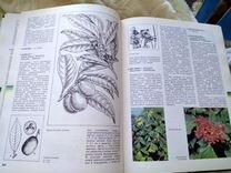 Книга инциклоедия про цветы