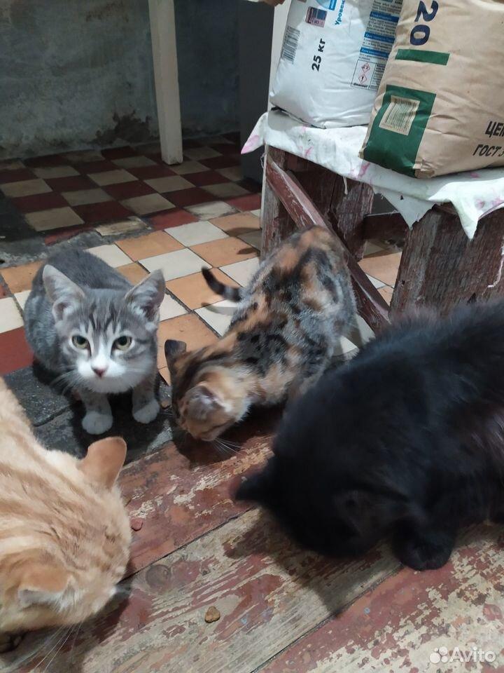 Котятата  89788330796 купить 9